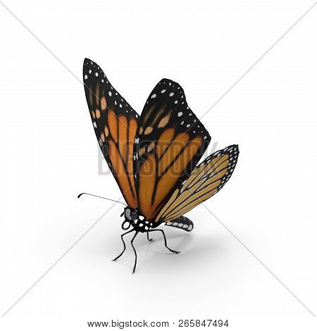 On a white background is a beautiful butterfly Monarch . 3D visualization. stock photo