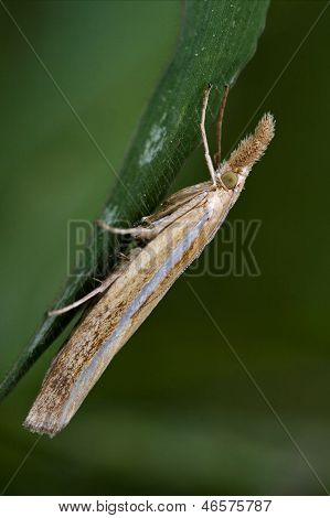 side of wild brown orange butterfly trichoptera on a green leaf in the bush stock photo