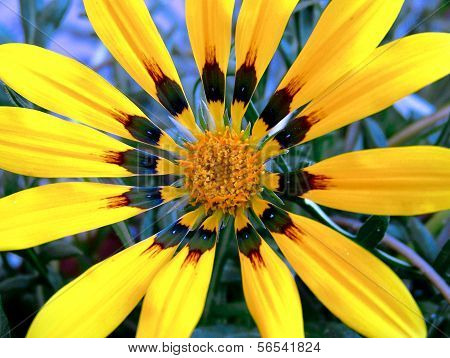 Macro image of yellow daisy flower from top. ** Note: Slight blurriness, best at smaller sizes stock photo