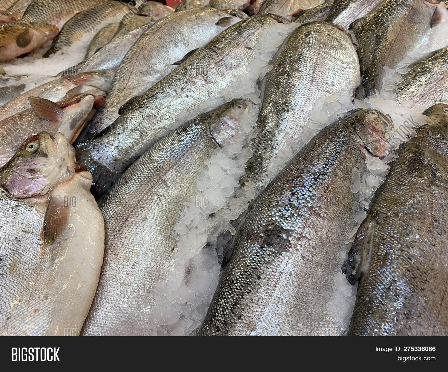 animal,background,catch,closeup,cold,cooking,cuisine,dead,delicious,diet,dinner,eat,eating,fillet,fish,fishing,food,fresh,freshness,frozen,gourmet,health,healthy,ice,industry,ingredient,marine,market,meal,meat,mediterranean,nutrition,ocean,raw,red,restaurant,sale,salmon,saltwater,sea,seafood,selling,shop,store,supermarket,tasty,uncooked,white