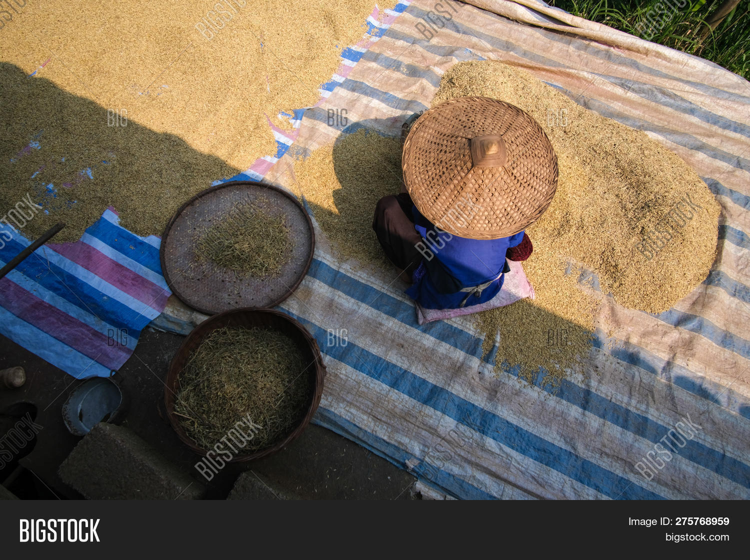 agricultural,agriculture,asia,asian,background,bamboo,classic,clean,countryside,culture,dry,farm,farmer,female,field,food,grain,grinded,hands,harvest,harvesting,hat,indonesia,ingredient,natural,nature,organic,outdoor,paddy,pattern,people,plant,plantation,rice,rural,shake,sieve,sift,sifting,sit,traditional,vietnam,village,woman,wood,work,worker,yellow