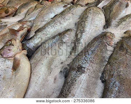 Frozen fresh raw sea fish in ice on market or shop shelf, close up stock photo