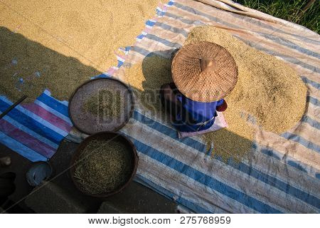 Sifting rice harvest season. A village old woman sieves the rice at home. Royalty high-quality free stock image of Vietnamese woman cleaning rice or sifting rice. Rural scenery in Cao Bang, Vietnam stock photo