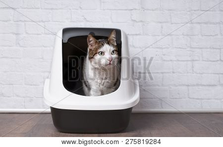 Cute tabby cat sitting in a litter box and looking sideways. stock photo