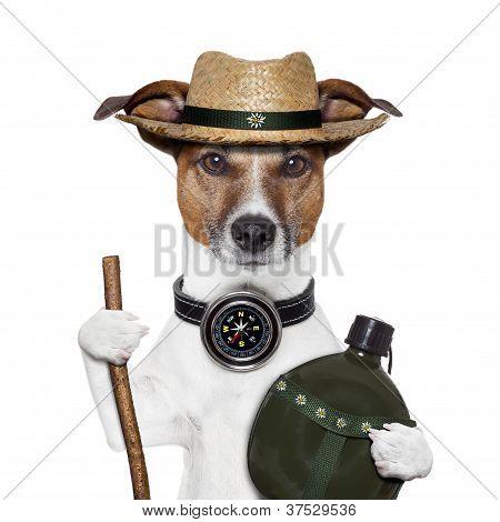Randonnée boussole chapeau chien