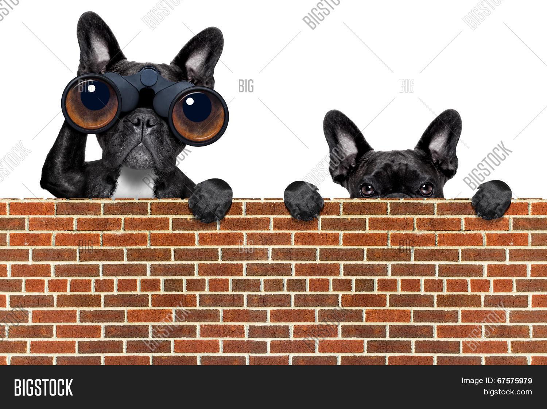 0fe5b3a4 🔥 Dog Looking Through Binoculars