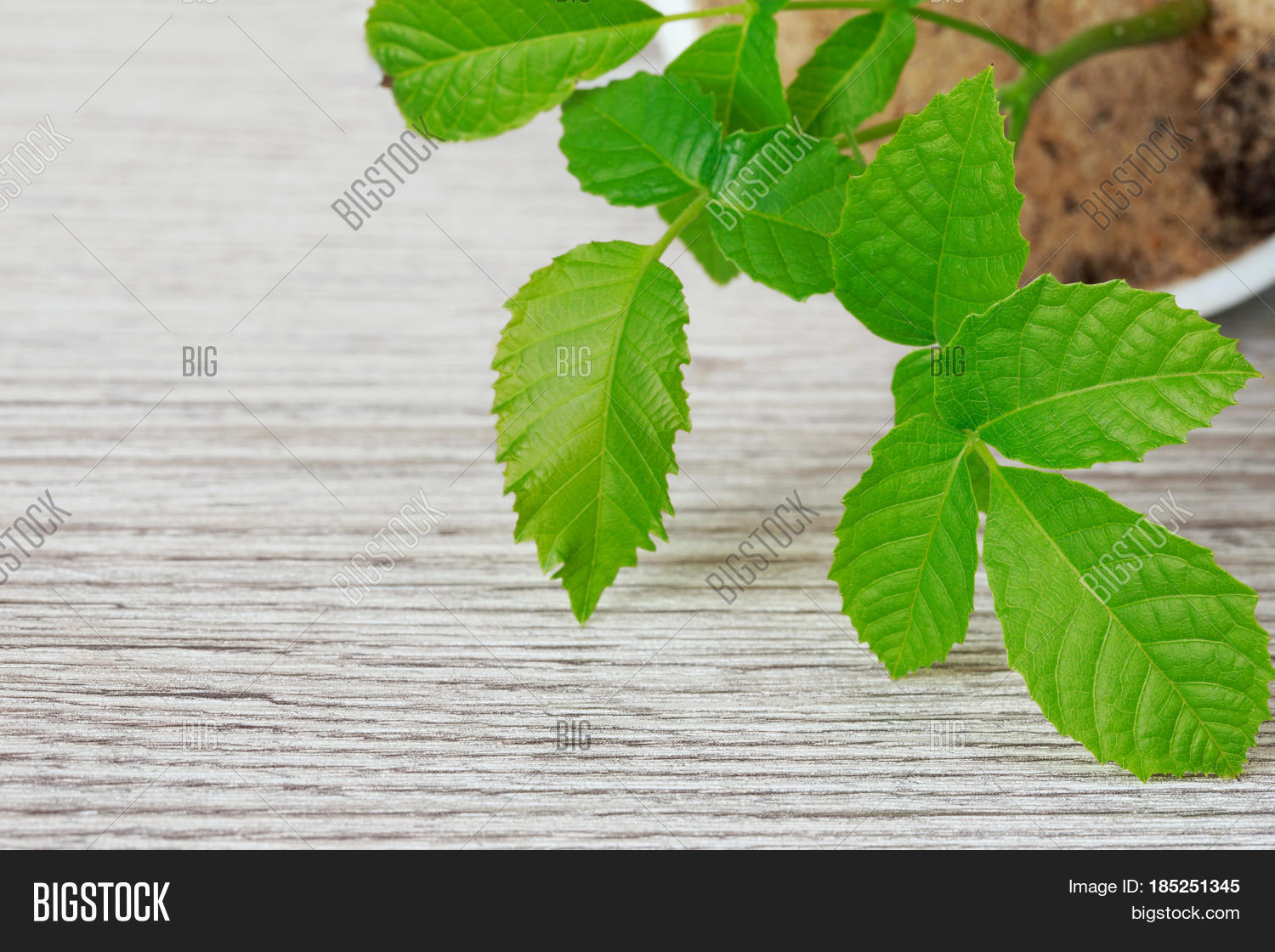 Sprout,agriculture,background,beginnings,botany,closeup,cracked,cultivation,gardening,germination,green,grow,growing,growth,healthy,little,nature,nut,nuttree,peel,plant,roots,sapling,seedling,shell,single,skin,small,stem,tree,walnut,walnuttree,wooden,young