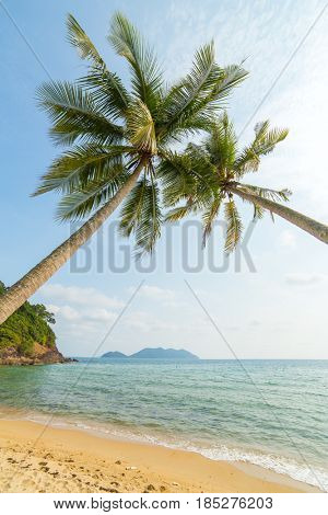 Palm trees on beautiful tropical beach on Koh Chang island in Thailand-Lg Fridge Magnet Skin (size 36x65)