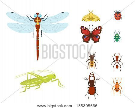 Colorful insects icons isolated wildlife wing detail summer bugs wild vector illustration. Nature pest small animal art sign element stag detail graphic. stock photo