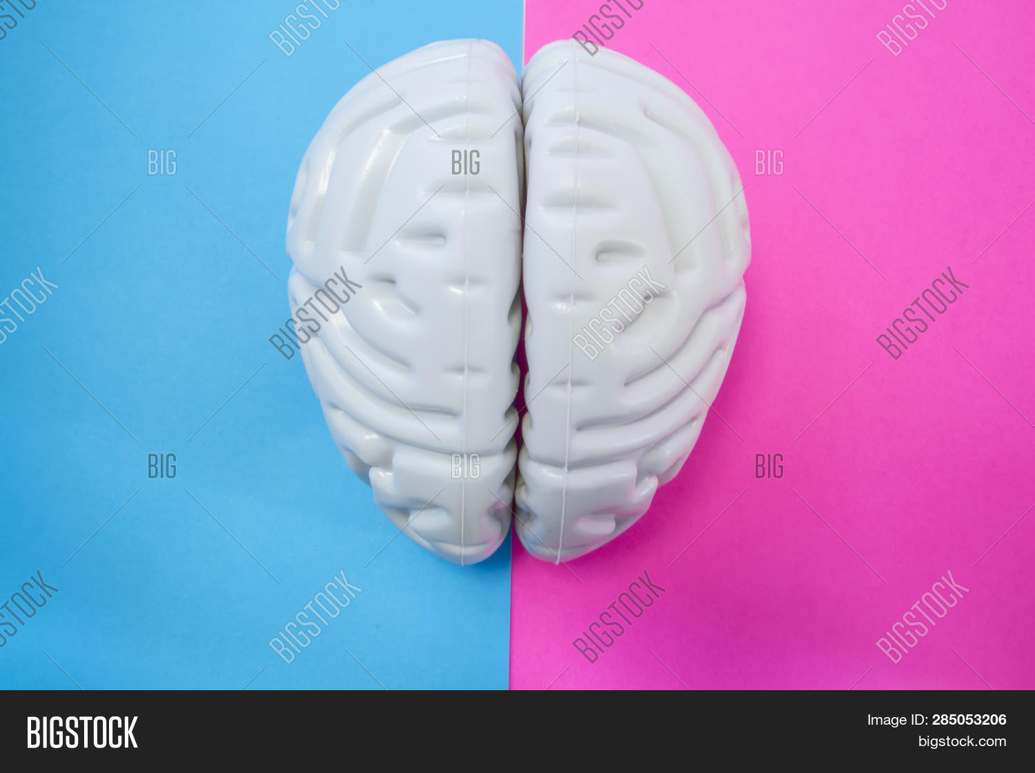 The Figure Of Human Brain Separates Half Blue Pink Background. The Concept Of Male And Female Brain.