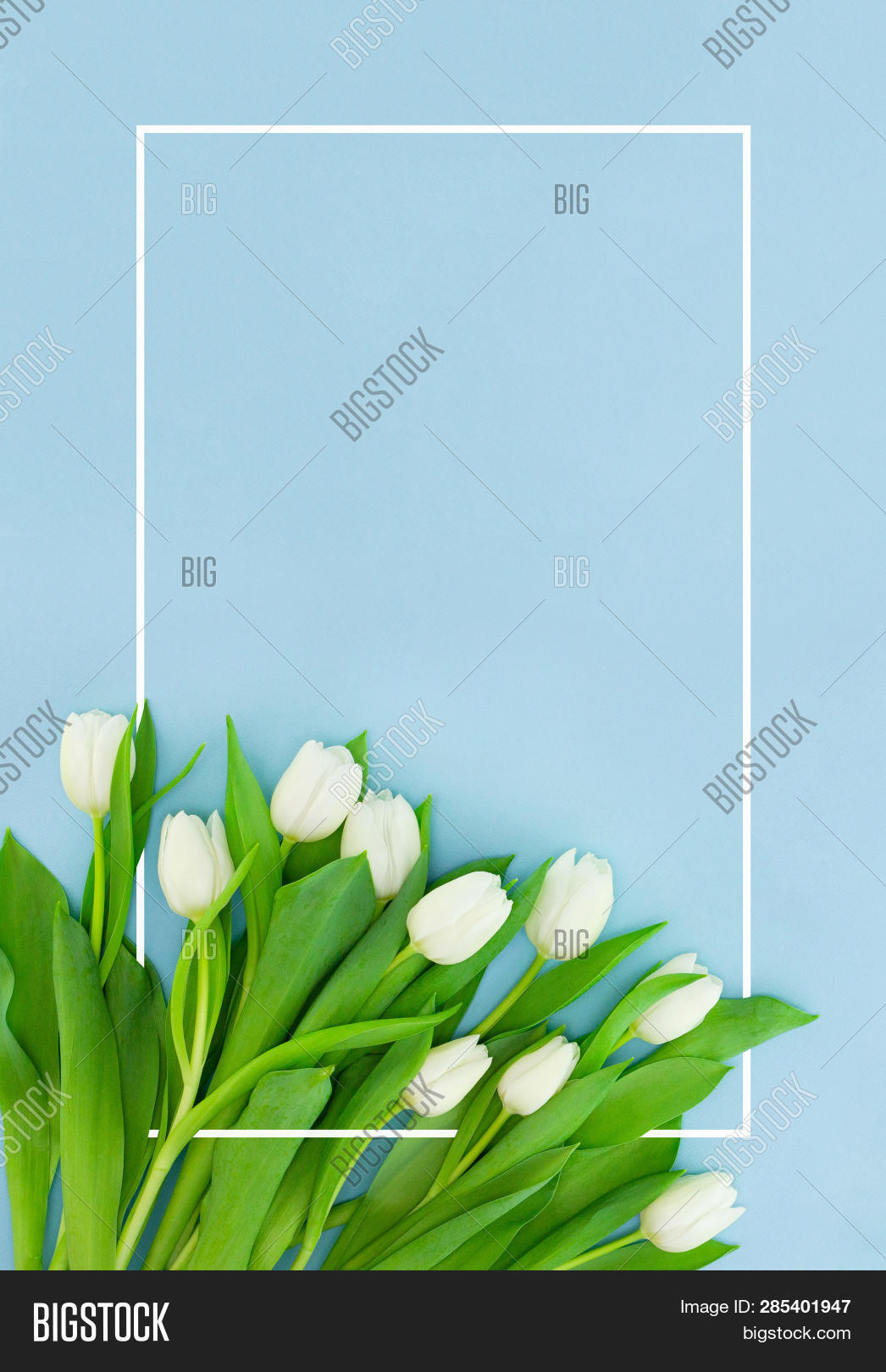 White Tulips On Blue Background With Frame, Flower Postcard For Women's Day, Mother's Day Or Sale Co