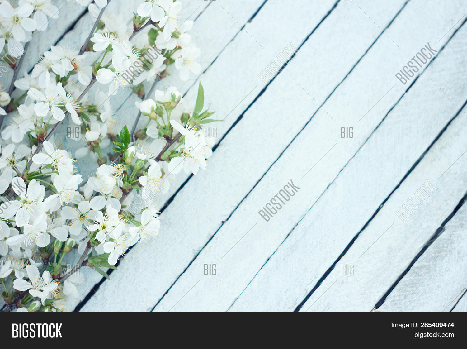 Spring Flowers On Wooden Table Background. Plum Blossom. Top View.spring Cherry Blossom On A Old Woo