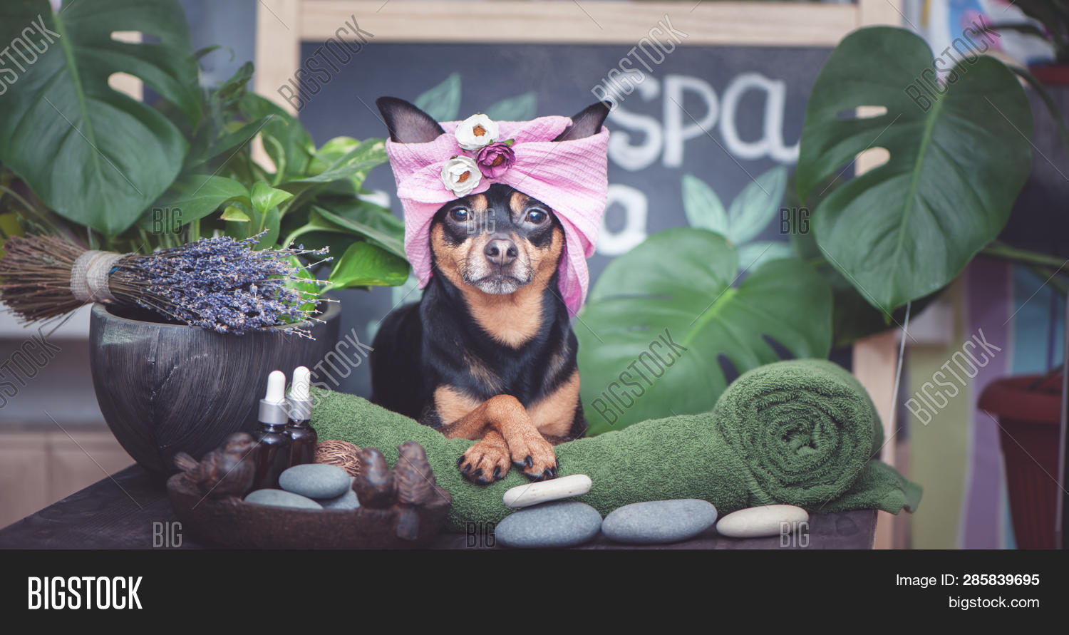 animal,background,bath,bathrobe,beauty,body,care,center,cosmetic,cucumber,cute,dog,facial,funny,grooming,health,healthy,jack,lifestyle,luxury,mask,massage,monstera,pet,puppy,relax,relaxing,rest,russell,salon,sauna,shower,spa,therapy,towel,treatment,wash,wellness