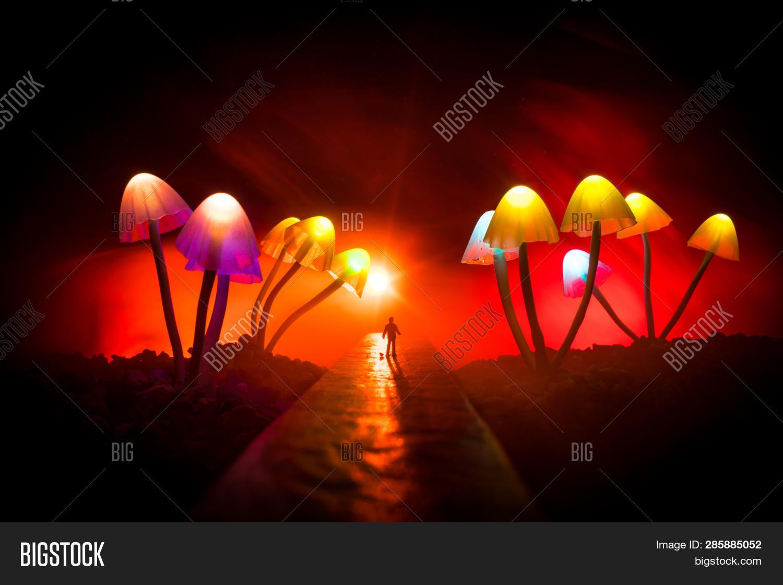 Three Fantasy Glowing Mushrooms In Mystery Dark Forest Close-up. Beautiful Macro Shot Of Magic Mushr