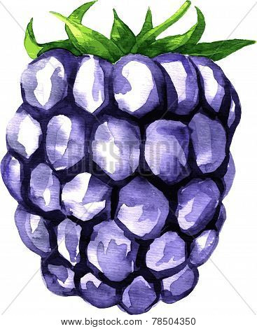 watercolor drawing blackberry, hand drawn vector illustration stock photo