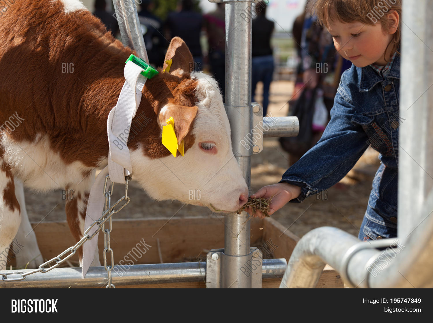 4-h,agriculture,animals,babies,blond,boys,brown,bull,calf,cattle,caucasian,cheerful,child,childhood,club,color,cow,cute,domestic,ethnicity,farm,farmer,fence,field,girls,grass,hair,happiness,horizontal,industry,lifestyles,livestock,males,nature,one,outdoors,people,person,pets,rural,scene,smiling,summer,togetherness,years,young,zoo