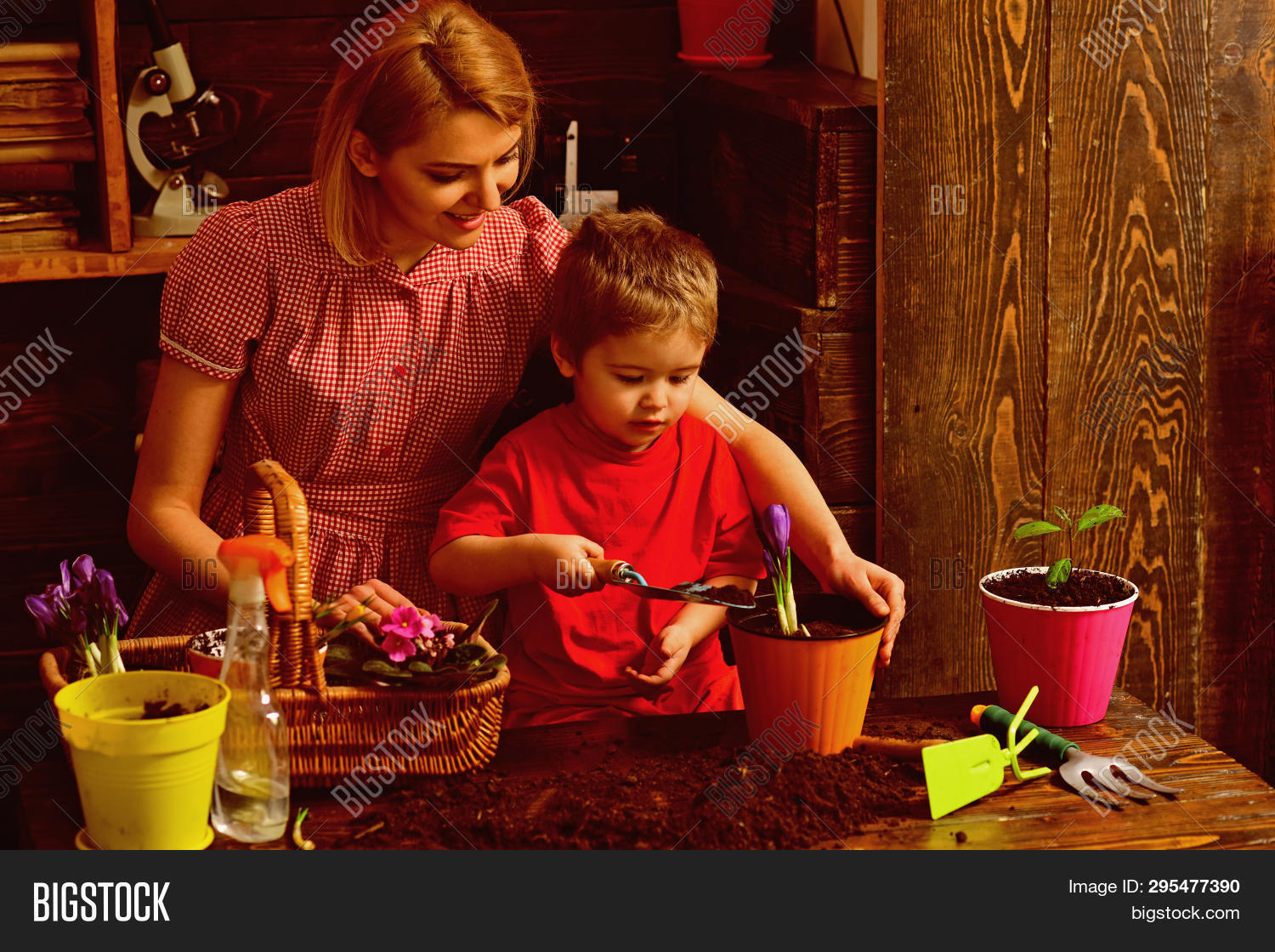 activity,adorable,baby,bloom,blossom,boy,child,childhood,cute,ecology,enjoy,environment,family,floral,flower,garden,gardening,growth,help,hobby,indoor,kid,little,love,mother,natural,nature,plant,planting,pot,small,soil,spring,summer,tool,trust,woman