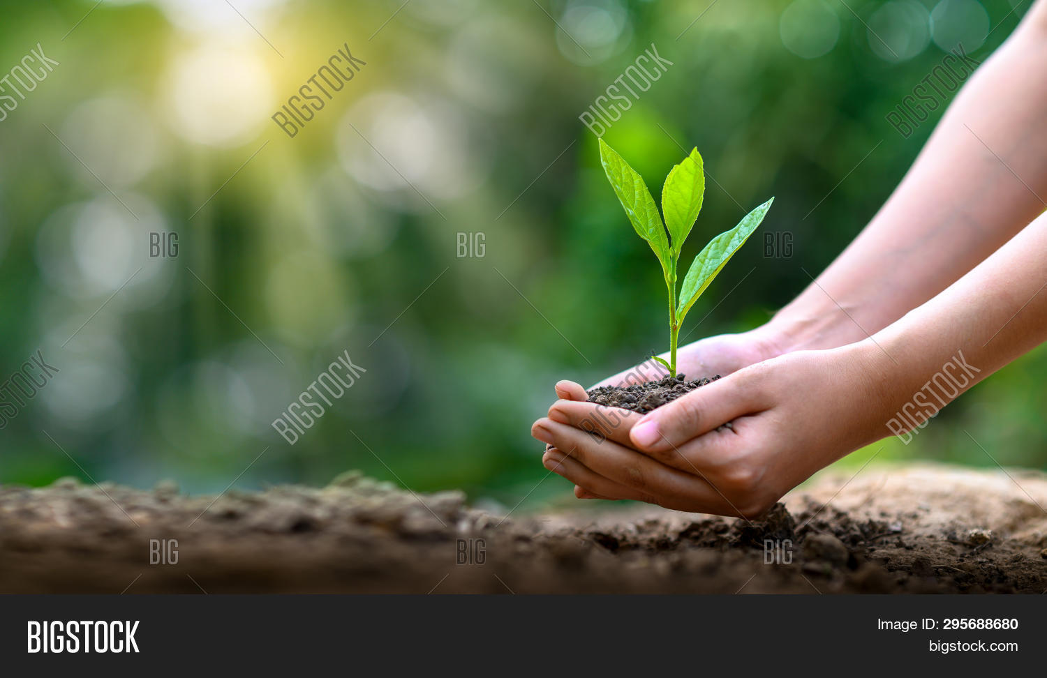 agriculture,background,bio,care,child,concept,conservation,day,design,development,earth,eco,ecology,environment,environmental,family,forest,friendly,global,globe,green,growth,hand,happy,holding,hope,illustration,leaf,life,man,natural,nature,new,people,planet,plant,poster,protect,protection,save,social,soil,spring,sprout,sustainable,symbol,tree,world,young