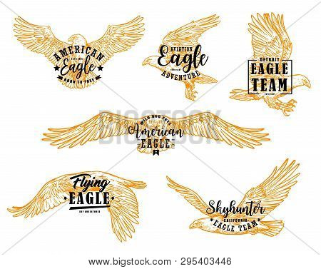 Eagle bird sketches with letterings. Vector hawk, falcon or american eagle spread wings, flying birds of prey heraldic emblems and mascots design stock photo