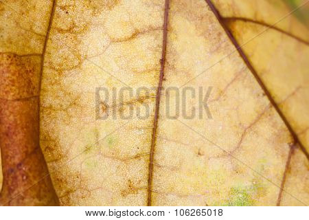 Abstract pattern of autumn leaf