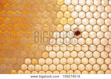 Macro view natural, organic honeycomb cells