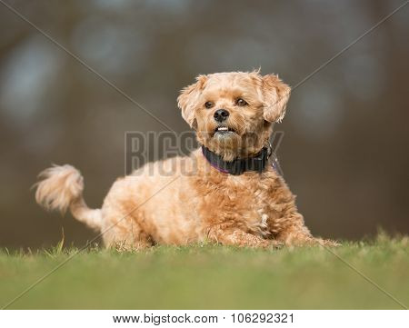 Dog Outdoors In Nature