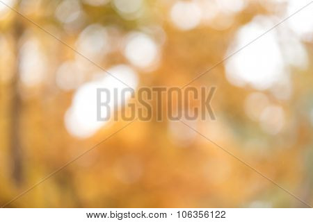Natural autumn blurred background with bokeh