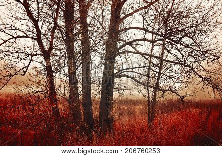 Autumn landscape in cloudy autumn weather. Bare November autumn trees in the fog. Colorful autumn landscape. Autumn trees in the fog. Cloudy autumn nature view of autumn forest stock photo