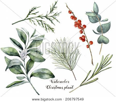 Watercolor Christmas plant and berries. Hand painted rosemary, eucalyptus, cedar, snowberry and fir branches isolated on white background. Floral botanical clip art for design or print stock photo