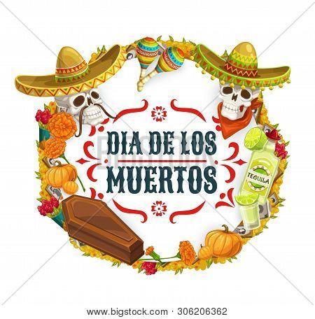 Day of Dead, Dia de los Muertos Mexican fiesta and catrina calavera skulls in sombrero. Vector Dia de los Muertos holiday in Mexico poster in marigold flowers, tequila and coffin frame stock photo