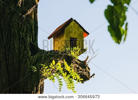 Close Up Of A Bird House In Nature. Amazing Nature. Close Up Of A Bird House In Nature. Bird House.