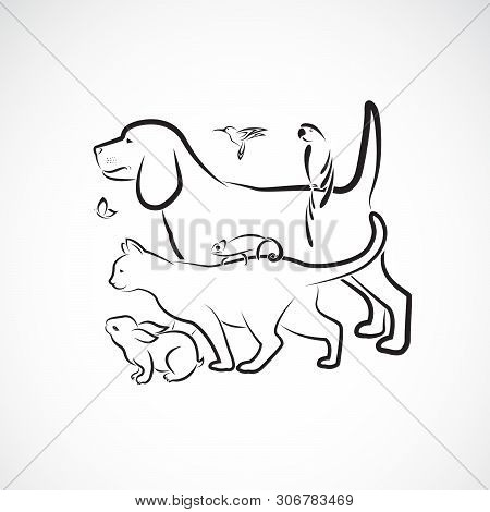 Vector Group Of Pets - Dog, Cat, Parrot, Rabbit, Butterfly, Hummingbird,  Chameleon, Isolated On Whi