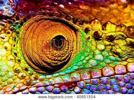 Photo des yeux reptilien coloré, agrandi la partie tête de caméléon, multicolore peau écailleuse de lézard, af