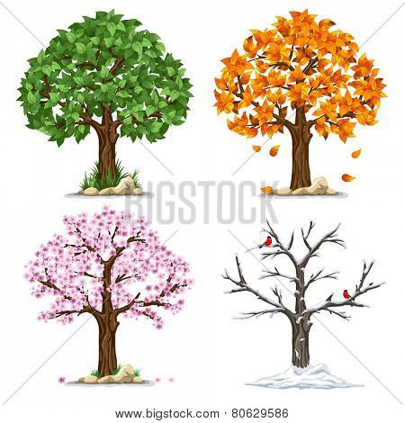 Tree in four seasons - spring, summer, autumn, winter. Vector illustration. Isolated on white backgr