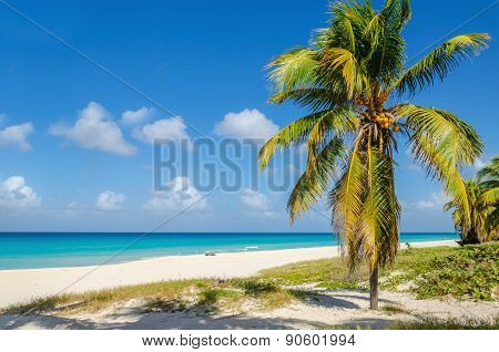 Amazing sandy beach with coconut palm tree, azure Caribbean Sea and blue sky, Caribbean Islands stock photo