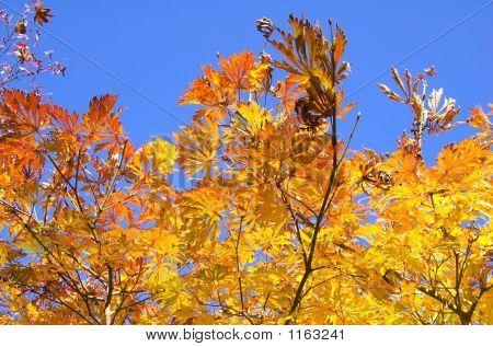autumn leaves in westonbirt arboretum gloucestershire england november. stock photo
