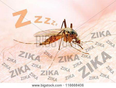 Sucking mosquito, dangerous vehicle of zika, dengue, chikungunya, malaria and other infections. Digi