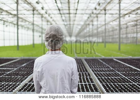 Close-up back portrait biotechnology woman engineer examining a plants for disease from greenhouse farm. Quality control eaf for disease stock photo