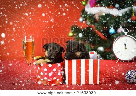 new year christmas snow concept Dog year pet on red background. New year puppy at clock. Year of dog holiday celebration with champagne in wine glass.  stock photo