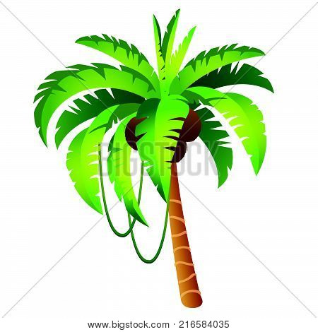 Cartoon palm tree with fruits isolated on white background. The tropical trees. Vector cartoon close-up illustration. stock photo