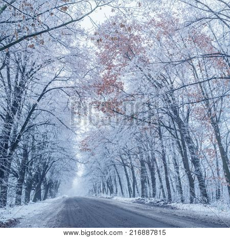 Snow-covered wayside trees. Winter landscape. stock photo