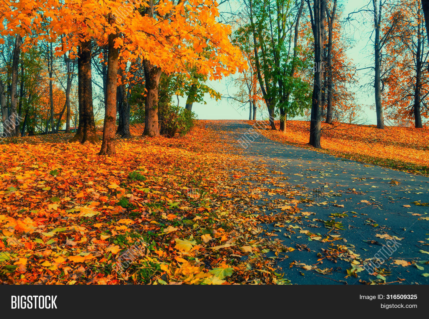 November,October,September,alley,autumn,background,beautiful,bright,city,cloudy,day,dry,fall,fallen,falling,foliage,footpath,foreground,forest,gold,grove,leaves,lonely,nature,panorama,park,path,quiet,red,road,scene,season,fall-forest,fall-landscape,fall-nature,fall-scene,fall-trees,fall-background,fall-leaves,fall-park,fall-outdoors,fall-leaf,fall-alley,fall-sunset,tree,view,wallpaper,weather,yellow,yellowed