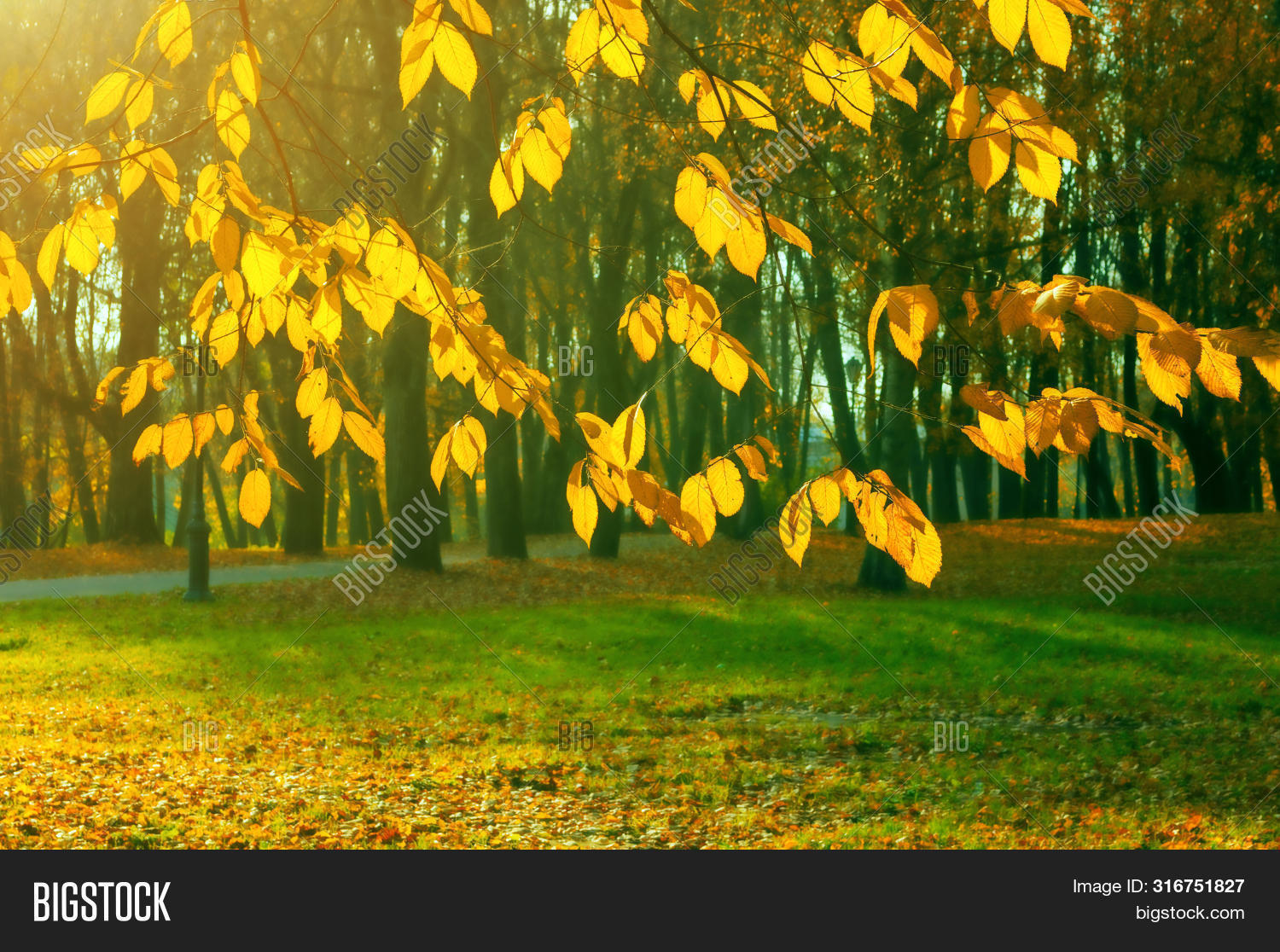 fall-alley,autumn,fall-background,beautiful,bright,city,fall-color,day,dry,fall,fall-foliage,footpath,foreground,fall-forest,gold,golden,fall-grove,fall-landscape,leaf,fall-leaves,fall-maple,nature,nobody,fall-november,october,orange,fall-outdoors,fall-panorama,fall-park,fall-quiet,red,russian,fall-scene,fall-season,september,fall-stunning,sun,fall-sunrise,sunset,tree,view,fall-wallpaper,weather,fall-yellow,yellowed