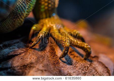 Guana leg on tree in nature. Iguana in exotic zoo terrarium stock photo
