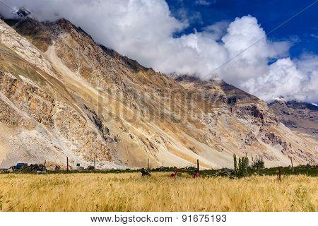 Agricultural view of Drass village with blue cloudy sky and mountain background Kargil Ladakh Jammu and Kashmir India stock photo