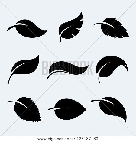 Leaves vector set. Leaves isolated from the background. Collection black silhouettes of leaves. Leaves icon different shapes. Leaves symbol in flat style. Leaves sign.