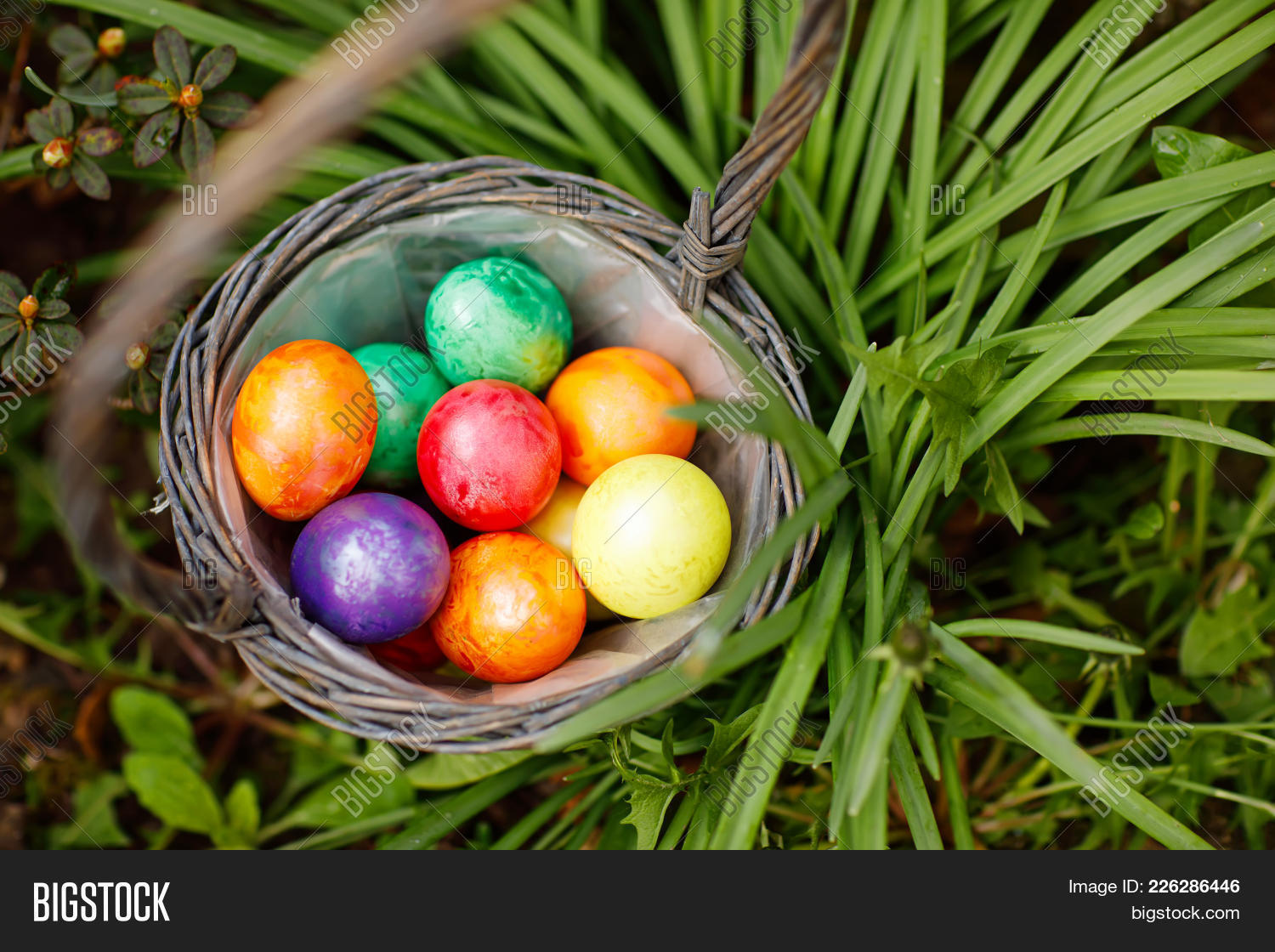 australia,basket,beautiful,catholic,celebration,christian,color,colored,colorful,concept,copy,creative,czech,daisy,dandelion,day,decorated,decoration,easter,egg,europe,festive,flora,flowers,german,grass,green,happy,holiday,lawn,nice,outdoor,paint,plant,present,rejoice,religion,season,seasonal,small,space,spring,sunny,surprise,symbol,tradition,traditional,usa