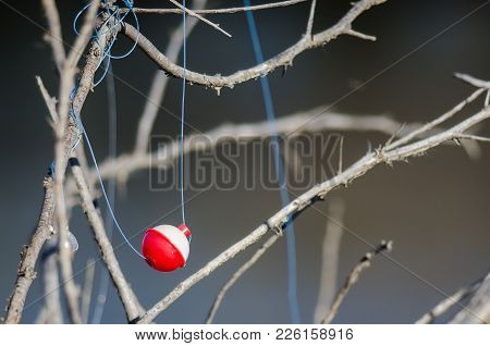 Fishing Bobber Entangled in the Dried Tree Branches stock photo