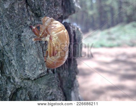empty insect shell on pine trunk with diffuse background stock photo