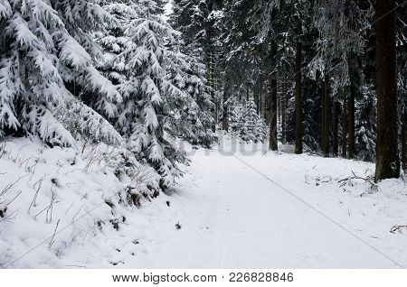 Winter forest landscape in early winter morning- deciduous frosty tree under winter snowfall. Nature view with snowy winter forest. stock photo